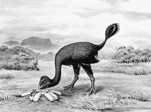 恐龙之乡 化石告急