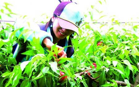 LOHAS STYLE 3 采摘·农庄