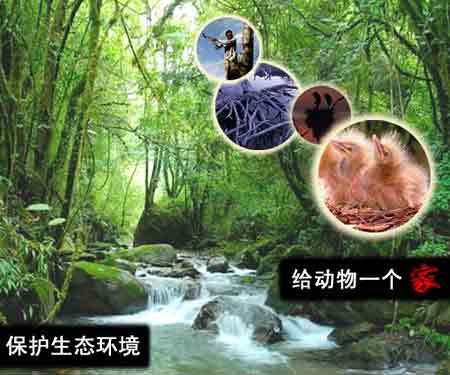 保护生态环境,给动物一个家 作者:周张健