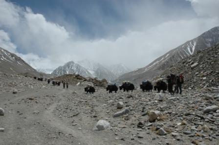 牦牛队正在往山上运送物资