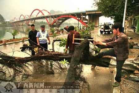 昨日下午的雷雨大风中,柳州滨江东路文惠桥下有两棵大树被风雨刮倒。倒下的两棵大树拦腰横在滨江东路上,造成道路交通中断。图为交警和附近道路施工工地上的工人将大树枝解,恢复道路通畅。记者 卿要林、通讯员 梁湘林 摄
