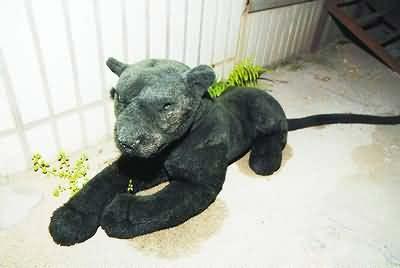 森林公安人员和动物园工作人员赶到后才发现只是玩具