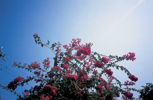 北大屿山一条村落里,小花开得正兴旺