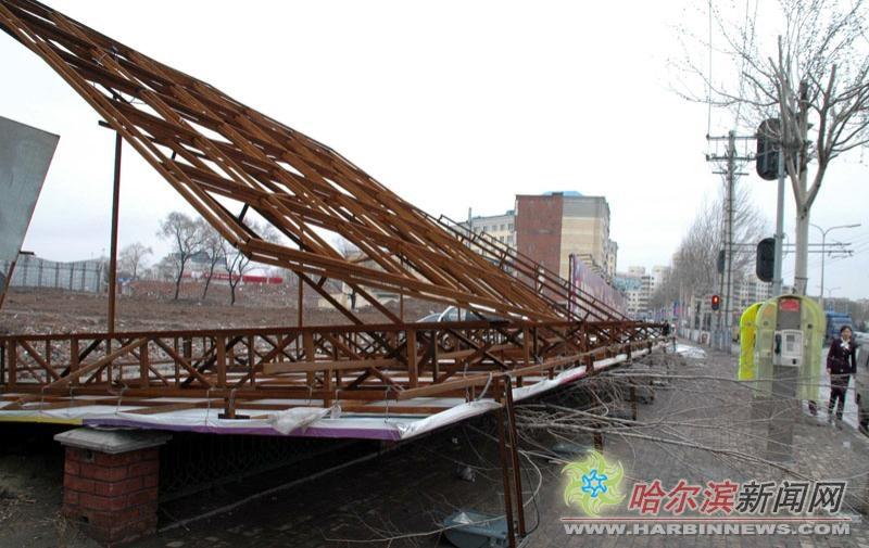 支撑广告牌的铁架子,铁皮坍塌在小树的身上.