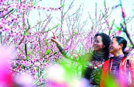 手绘桃花树简笔画内容图片展示