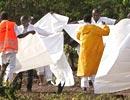 肯尼亚确认找到失事客机残骸