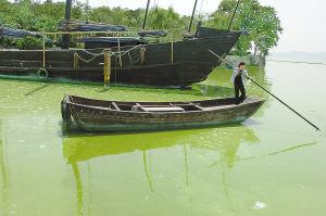 太湖蓝藻,无锡太湖蓝藻,太湖蓝藻爆发,无锡太湖蓝藻爆发