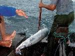 渔民打鱼日子