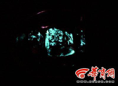黑暗状态下猪肉发蓝荧光 本报记者王智摄