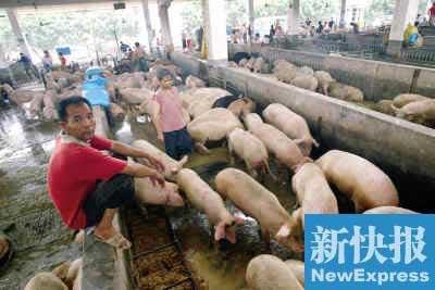 贵价肉料持续到7月初
