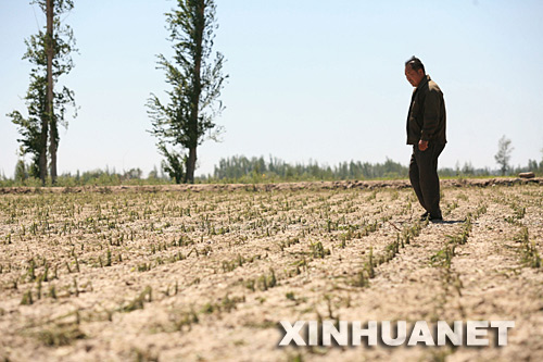5月28日,在察布查尔锡伯自治县爱新舍里镇,一位农民察看遭受雹灾的玉米地