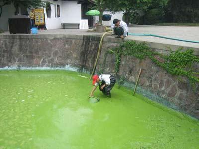 2007年5月9日,无锡,鼋头渚风景区每年要投入100多万清理景区内的蓝藻,工作人员抽走进入景区内塘的蓝藻。 来源:CFP