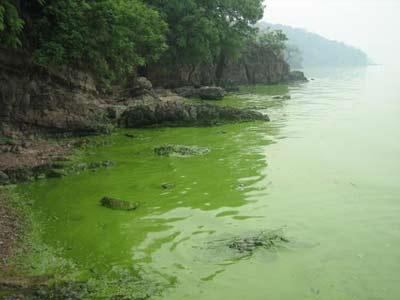 无锡,鼋头渚最佳观湖景点,但蓝藻成祸,游客已经不能与太湖水亲密接触了 来源:CFP