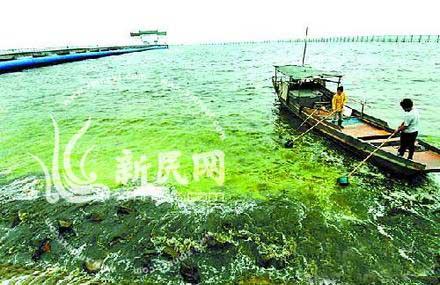 """太湖蓝藻爆发,使湖水、河水发臭、发浑。群众盼望""""太湖美,美就美在太湖水""""成为名不符实。"""
