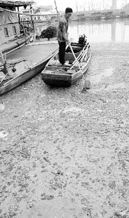 5月30日,一位渔民在与太湖相通的一个港湾里拨动蓝藻湖水。