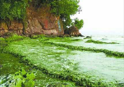 资料图:受蓝藻污染的太湖水