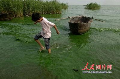 6月4日,巢湖岸边,一附近村民从湖里上岸,巢湖湖边的水质一片碧绿。