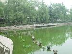 美丽明湖静如处子