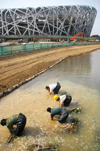 工人们正在对国家体育场南侧的人工河进行试水,并在水下种植植物。