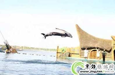 海狮会发笑