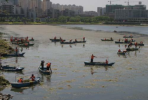 各公园的工作人员在湖面上打捞水草。