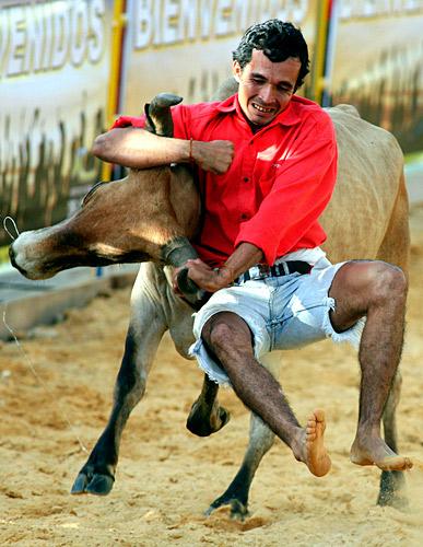 哥伦比亚波哥大,当地牛仔竞技比赛中,一名牛仔正试图扳倒一头蛮牛。