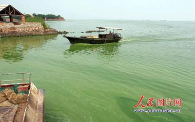 6月15日,飘浮在安徽巢湖居巢区中庙一带湖面上的蓝藻。