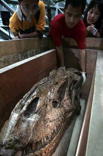 和平永川龙头骨长度超过1米,完整性接近100%。早报记者高剑平图