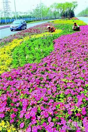 正在进行绿化美化的朝阳区奥运景观大道