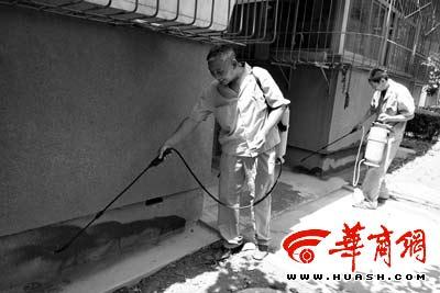 白蚁防治所人员喷洒药水清理四星大蚁