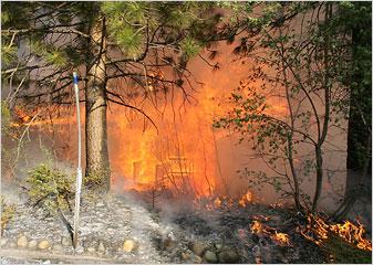 6月24日,美国加州发生森林大火。