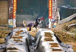 狗是砖窑必不可少的配置。