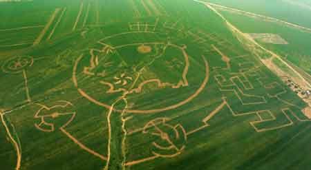 玉米地里的女人_大连建成世界最大玉米迷宫(组图)-搜狐新闻