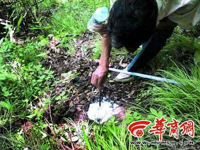 今年5月,野生动物保护管理站的工作人员在野外提取华南虎的脚印