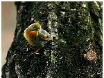 精美野生鸟类摄影专辑