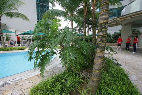 图文:[亚洲杯]国足游泳训练 池边绿树环绕