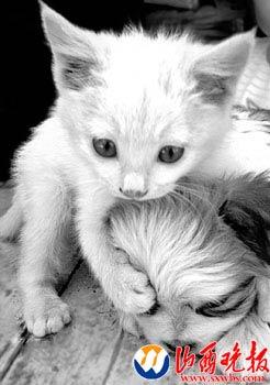 一猫两狗崽共享母爱 狗妈妈努力保护三孩子