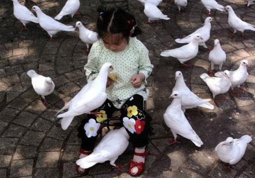 女童与鸽子