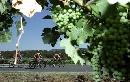 图文:07环法第十段赛况 沿途葡萄惹人爱
