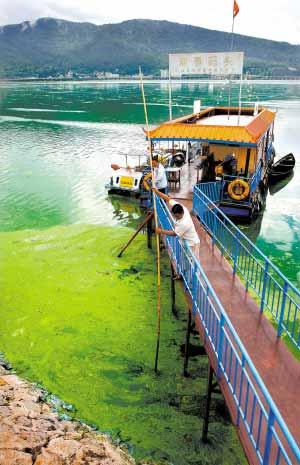 云南滇池蓝藻