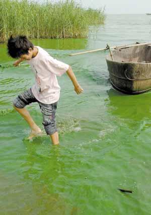 巢湖水质变绿