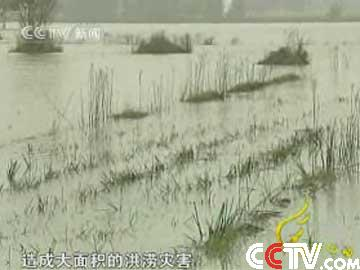 大水让安徽省蚌埠市固镇县连城镇楼底村变成了一片泽国
