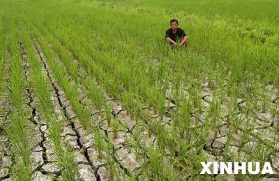 7月18日,黑龙江省鹤岗市东山区东方红乡桦春村的一位农民坐在由于干旱