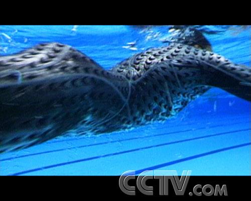 """图文:CCTV《同一个梦想》 """"鲨鱼皮""""泳衣研制"""
