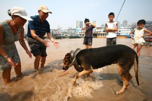 宠物水中玩耍
