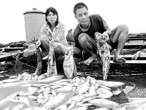 渔民梁昌文与妻子望着死鱼欲哭无泪。