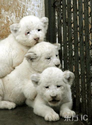 北方森林动物园从南非引入了幼年