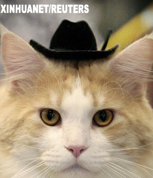 美国:群猫竞美(图)