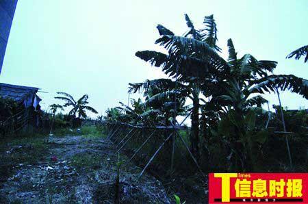 番禺区化龙镇柏堂村12小队这处偏僻的香蕉林被刘法伟选中做了制毒工场。