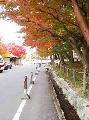 """图文:举办城市大阪之风光无限 大阪""""枫""""情"""